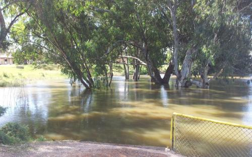 Darling River, 10.6 metres, Baker Park April 7